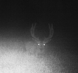 Night Buck Front