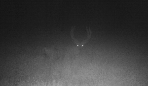 Night buck broadside
