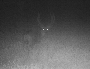 Night buck quartering